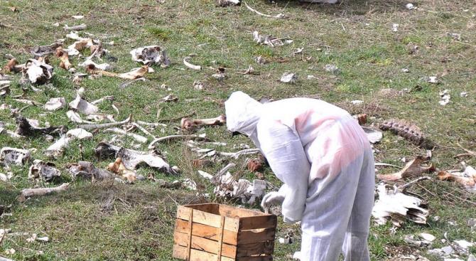 Намериха животински трупове в напоителните канали в Сливенско