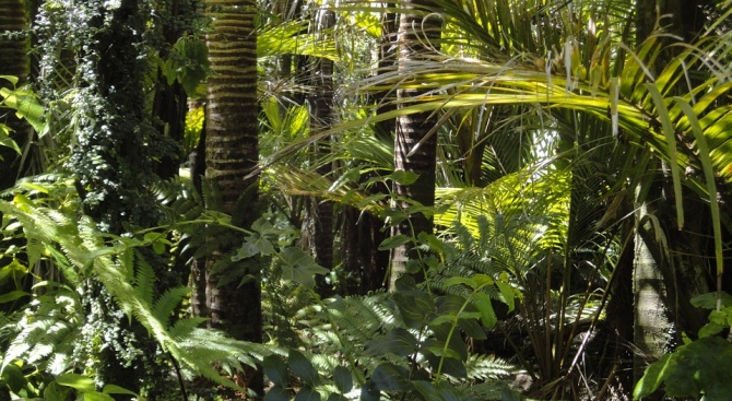 Екопротест в Лондон заради вредите, нанесени на амазонските дъждовни гори
