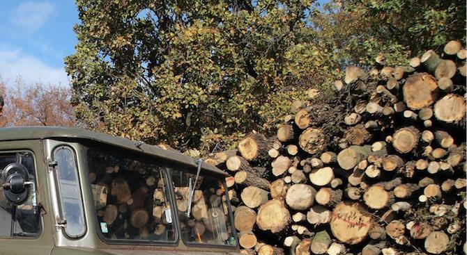 Близо 20 000 домакинства от Североизточна България са подали заявления за отопление с дърва