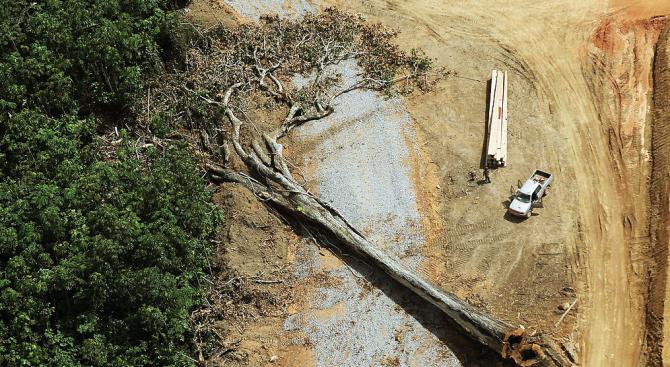 Норвегия блокира 30 милиона евро за Бразилия заради обезлесяването в Амазония