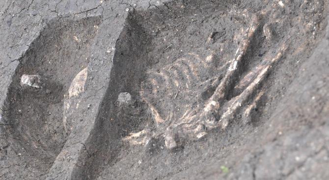 Археолози откриха скелет на бебе от халколитната епоха при проучванията на могилата край с. Юнаците