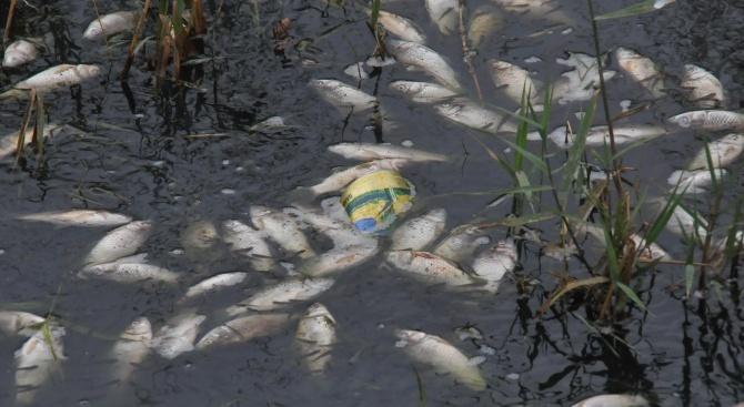 Проверяват сигнал за мъртва риба в язовир Ръжица
