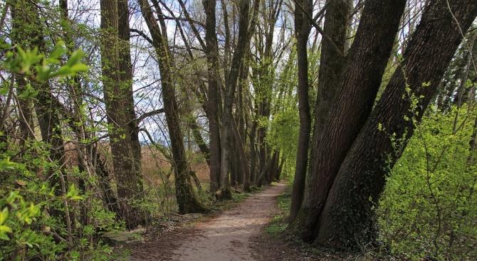В Търговище са засадени 630 нови дървета през последните две години