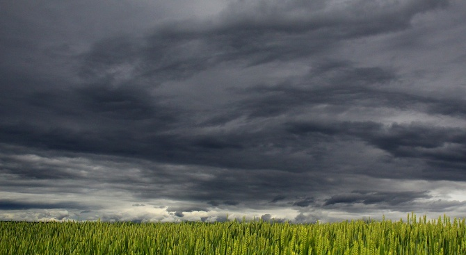 Бурите унищожиха близо 1800 дка със земеделска продукция в Русенско