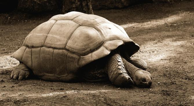 Най-възрастната домашна костенурка навърши 121 години