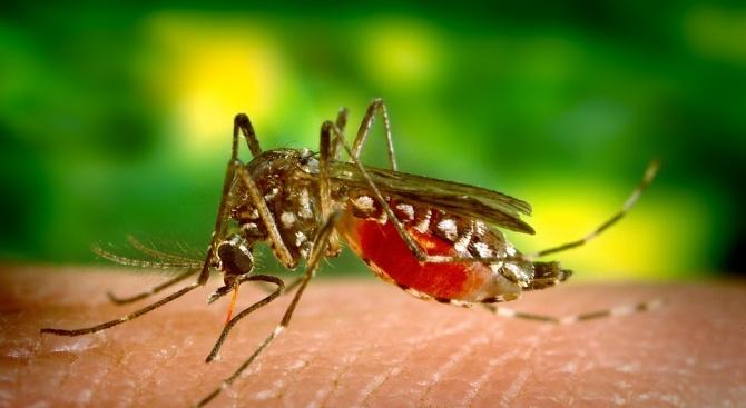 Пета обработка срещу комари започва във Велико Търново