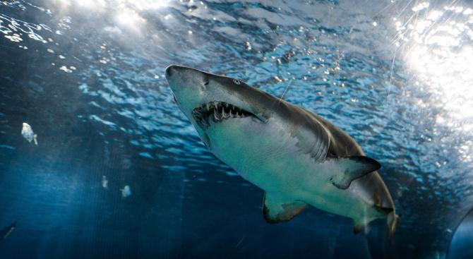 12-годишно дете оцеля след нападение на акула
