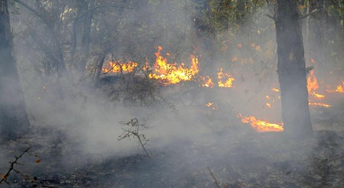 Пожар пламна в землището на Ветрен