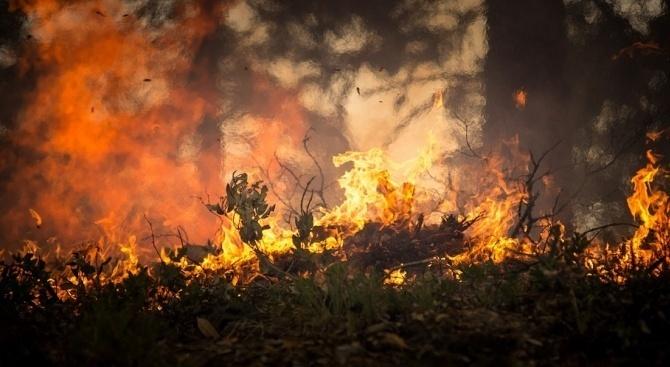 Пожар е избухнал в зона с тръстика близо до морето в турски окръг
