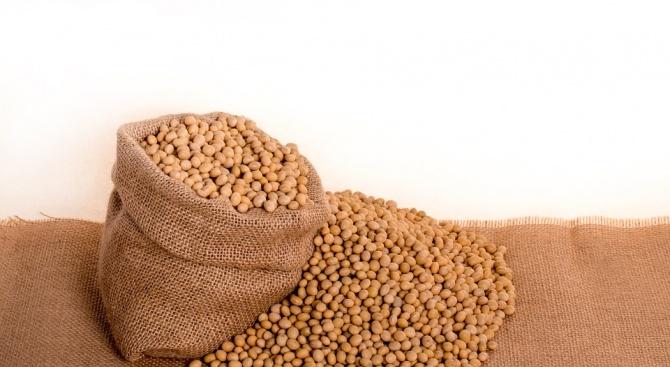 Проверяват фуражна суровина от Бразилия със съмнение за наличие на салмонела