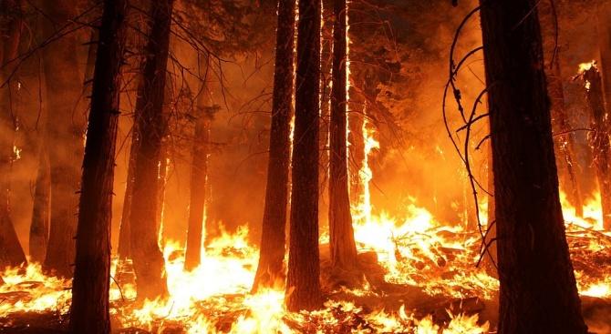 Голям пожар бушува край Охрид