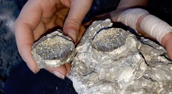 Палеонтолози в търсене на български динозаври