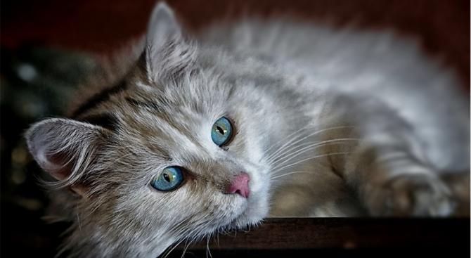 Котка изпрати гола снимка на стопанката си на непознат