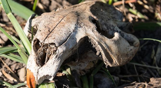 Откриха череп на австралопитек, живял преди 3,8 млн. г. на територията на Етиопия