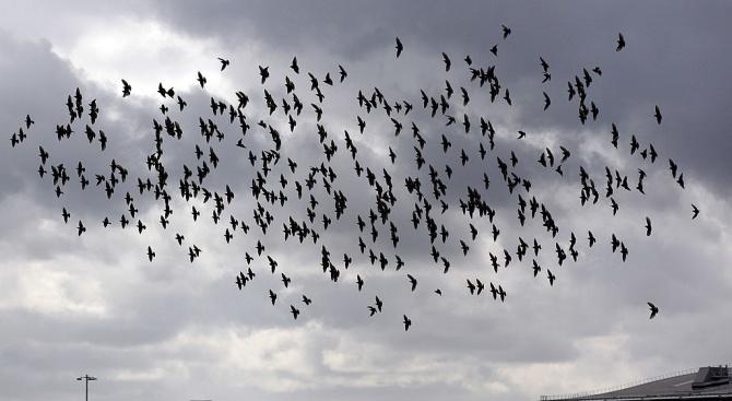 Руски пътнически самолет кацна принудително след сблъсък с птици