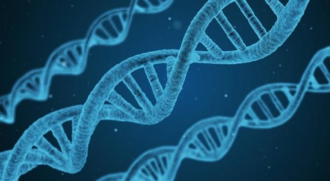 Генетична мутация позволява на някои хора да спят само по 4 часа на денонощие