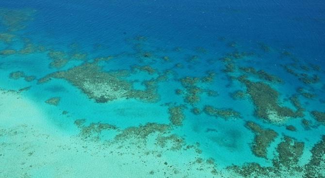 """Учени: Перспективите за Големия бариерен риф са """"много лоши"""""""