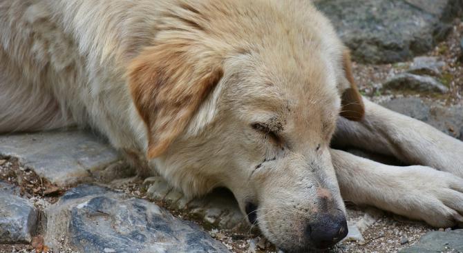 Изрод влачи куче, завързано с въже за колата му