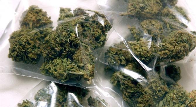 Задържаха двама мъже, обвинени в засаждане и отглеждане на марихуана