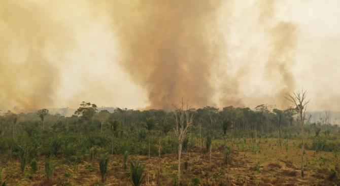 WWF алармира, че пожарите в Амазонските джунгли заплашват 265 застрашени вида