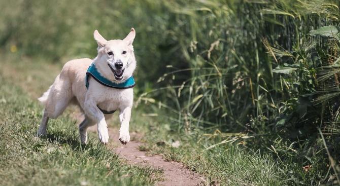 Учени: Човекът е оформил мозъците на кучетата, за да се държат по специфичен начин