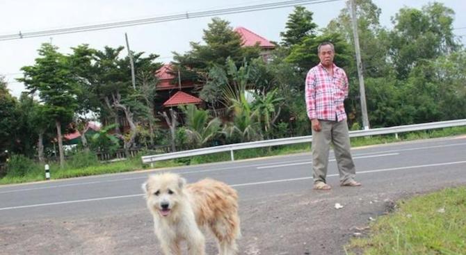 Куче се отрече от стопаните си, чакало ги е 4 г. на същия път, на който са го забравили