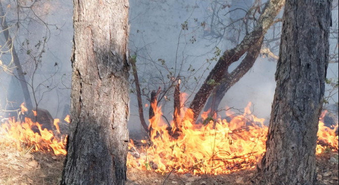 2 дка иглолистна гора изгоря при пожар край Девин