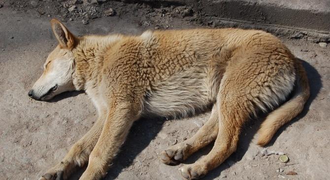 Разследват убийството на бездомно куче в Дебелец