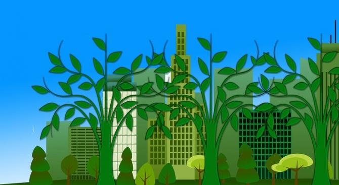 ООН залага на градските гори, за да разхлади градовете в Африка и Азия