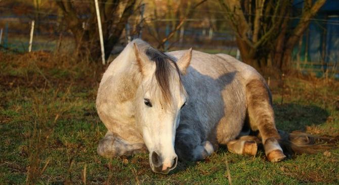 Застреляха кобила в землището на видинско село