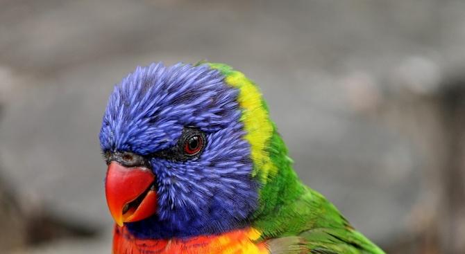 Холандската полиция арестува папагалче