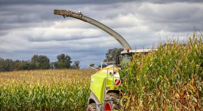 Стопаните в Разградско прибират по 731 килограма царевица от декар