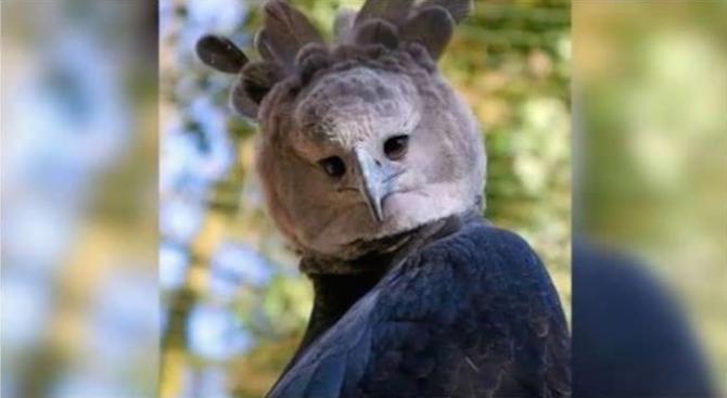 Мъж си направи снимка с птица, чието съществуване пробуди небивал интерес