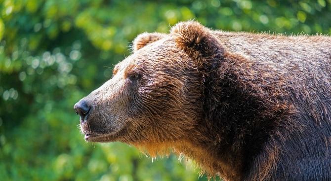 Сигнал за мечка в двора на гимназия в Габрово