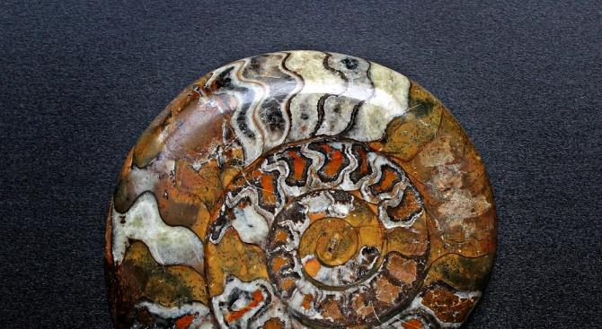Започва ХХIX изложение на минерали, фосили и скъпоценни камъни в София