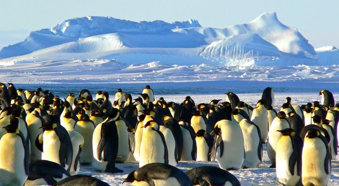 Учени настояват за по-голяма защита за императорските пингвини