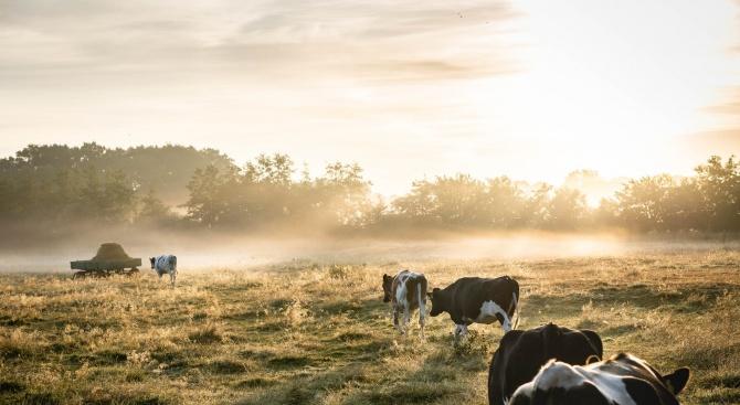 ДФЗ преведе първите 19 млн. лева на над 4400 животновъди за Кампания 2019