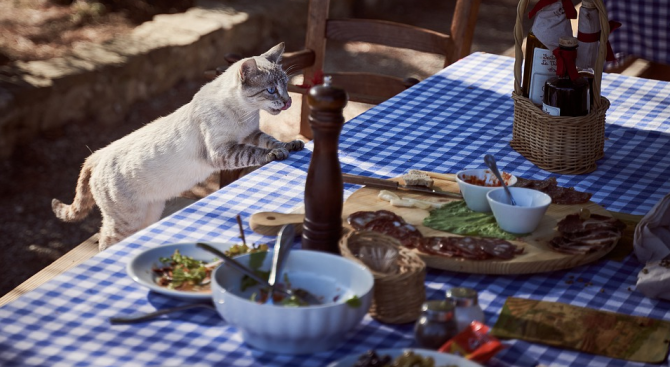 Храненето на домашните любимци със сурово месо не е безопасно