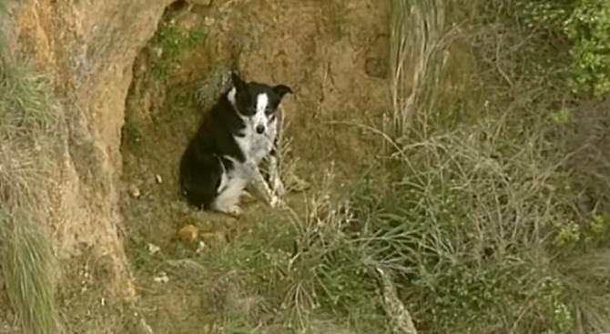 Три часа спасяваха куче, заседнало на отвесна скала в Австралия