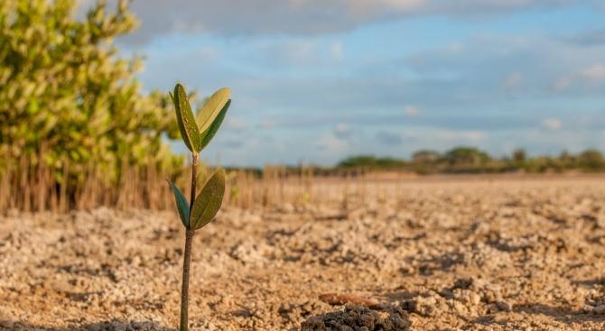 Повече от 200 дръвчета са засадени през тази година в Севлиево
