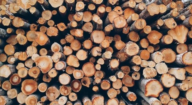 Хванаха нарушител с условна присъда да краде дърва
