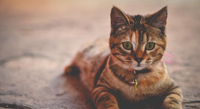Котки спасиха италианска двойка от свлачище