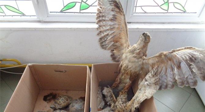 11 препарирани животни от защитени видове са иззети от частен дом