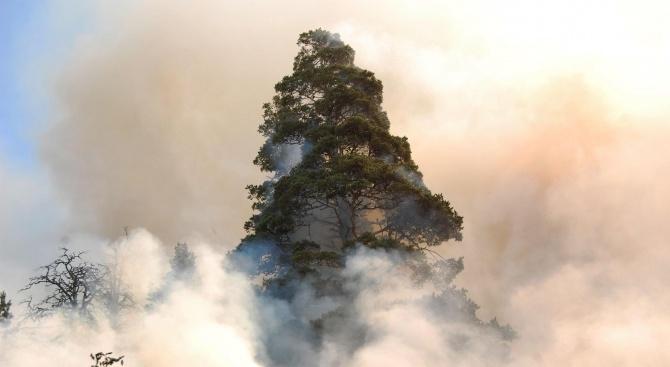 Пожарът в Рила изпепели досега гора за над 1 млн. лв.