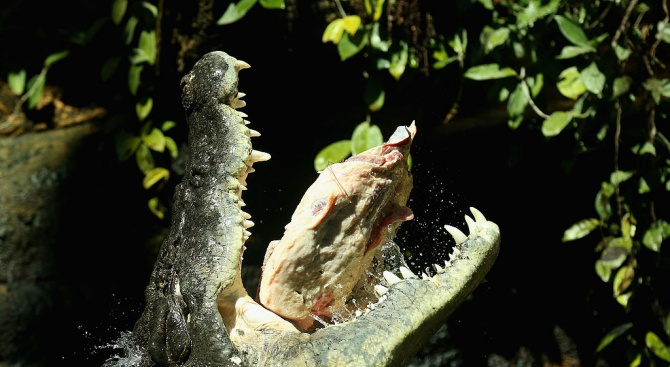 11-годишно момиче спаси своя приятелка от челюстите на крокодил, извади му очите
