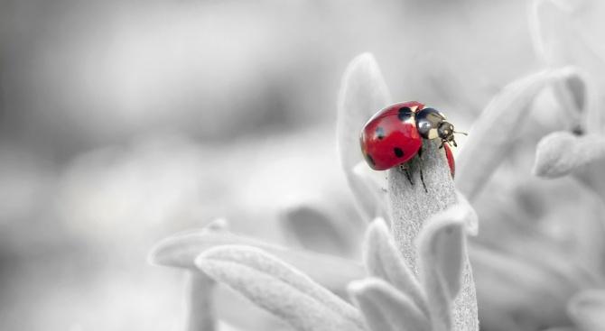Популацията на насекомите е намаляла с една трета