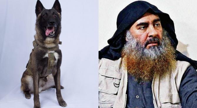 Породата белгийска овчарка рекордно поскъпна след ликвидирането на Ал Багдади