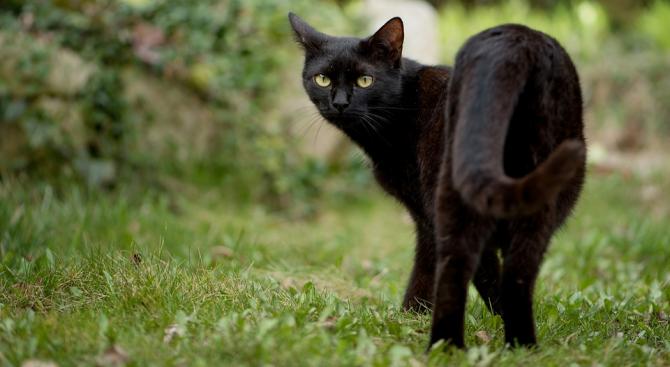 Безследно изчезнала от 6 г. котка се прибра за Хелоуин