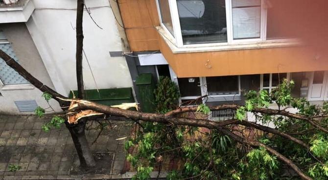 Дърво падна в центъра на Бургас