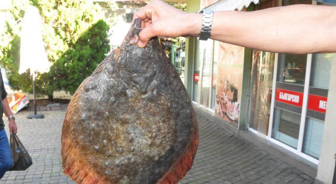 Квотата на България и Румъния за улов на калкан в Черно море е увеличена с 32%